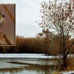 Winter Photography: Bosque del Apache Wildlife Refuge, Part 2