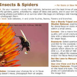 Insect and Spider Macro Photography Tips
