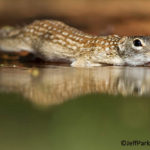 Photographing Wildlife in the South Texas Brush Country