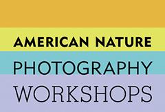 american-nature-logo