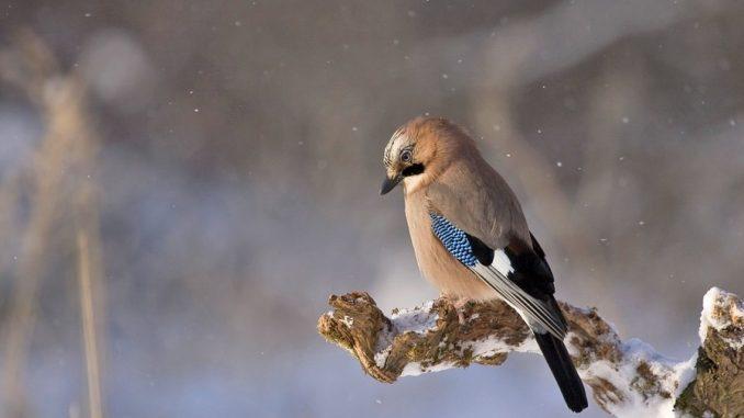 bird-thirds-composition