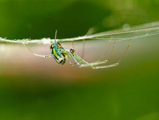 cover-spider-gestalt