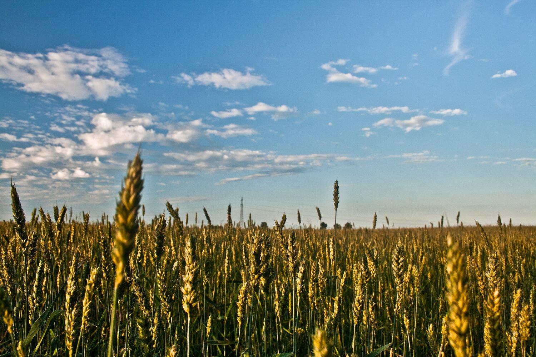 Understanding Depth of Field in Landscape Photography ...