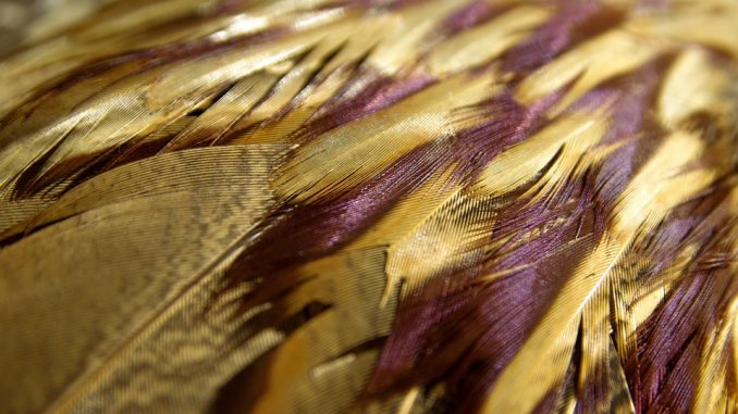 unusual things to photograph - Birds feathers close up