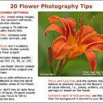 20 Flower Photography Tips
