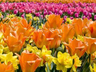 flowers_GroupFlowers