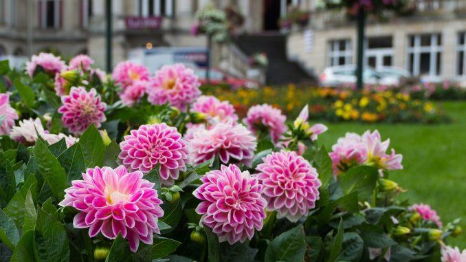 garden-photography