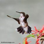 Guide to Hummingbird Photography – Create an Outdoor Studio
