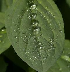 rainy-leaf