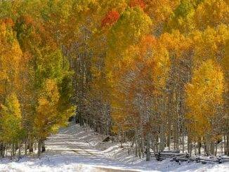 Fall_downthe-road_7105