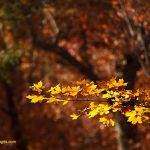 Fall Photography Ideas – 7 Useful Fall Photography Tips