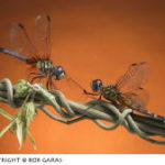 Photographer Profile: Bob Garas
