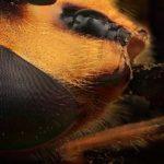Fine Art Microphotography