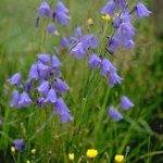 PHOTOGRAPHING BLUE WILDFLOWERS