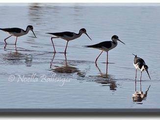 nb_w-birds---1390