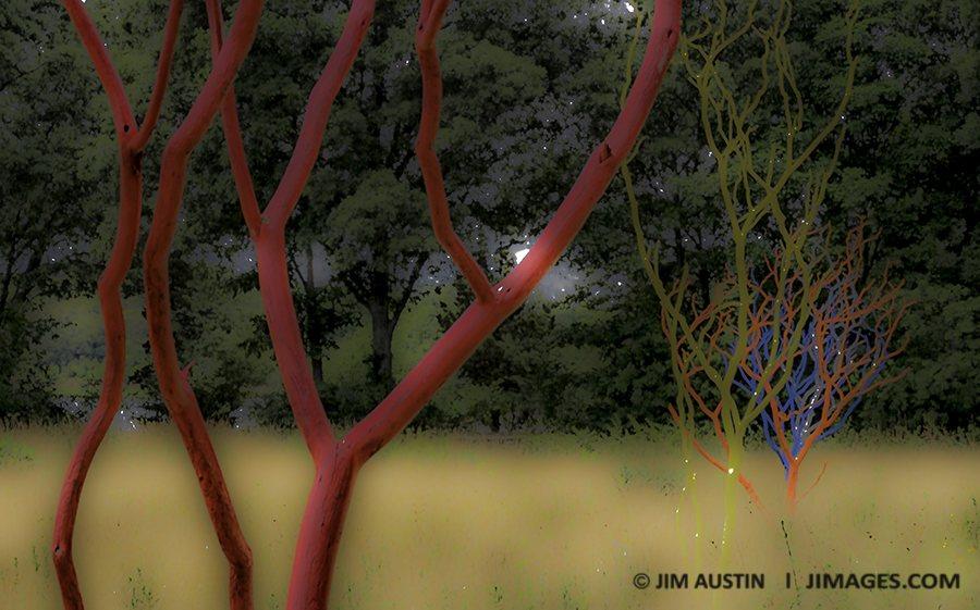 blur-motion-4-clarity-reduction-jim-austin-jimages