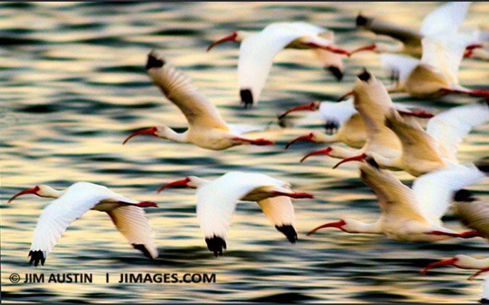 blur-and-movement-18-panning-jim-austin-jimages