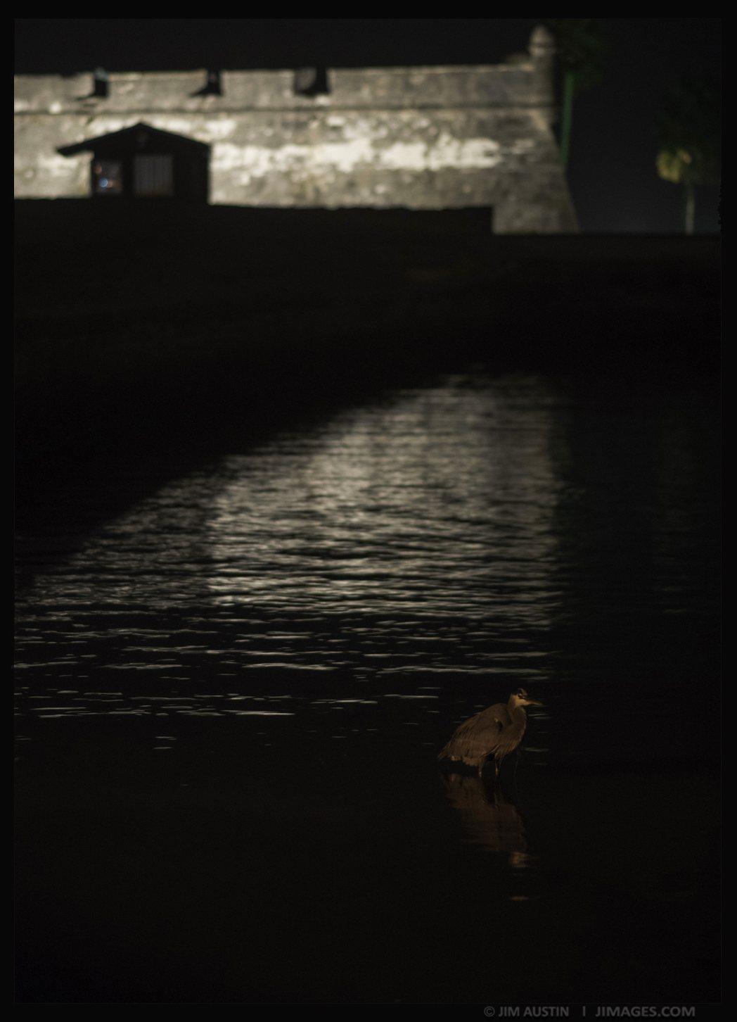jim-austin-jimages-nikon-three-lenses-heron-fort-matanzas