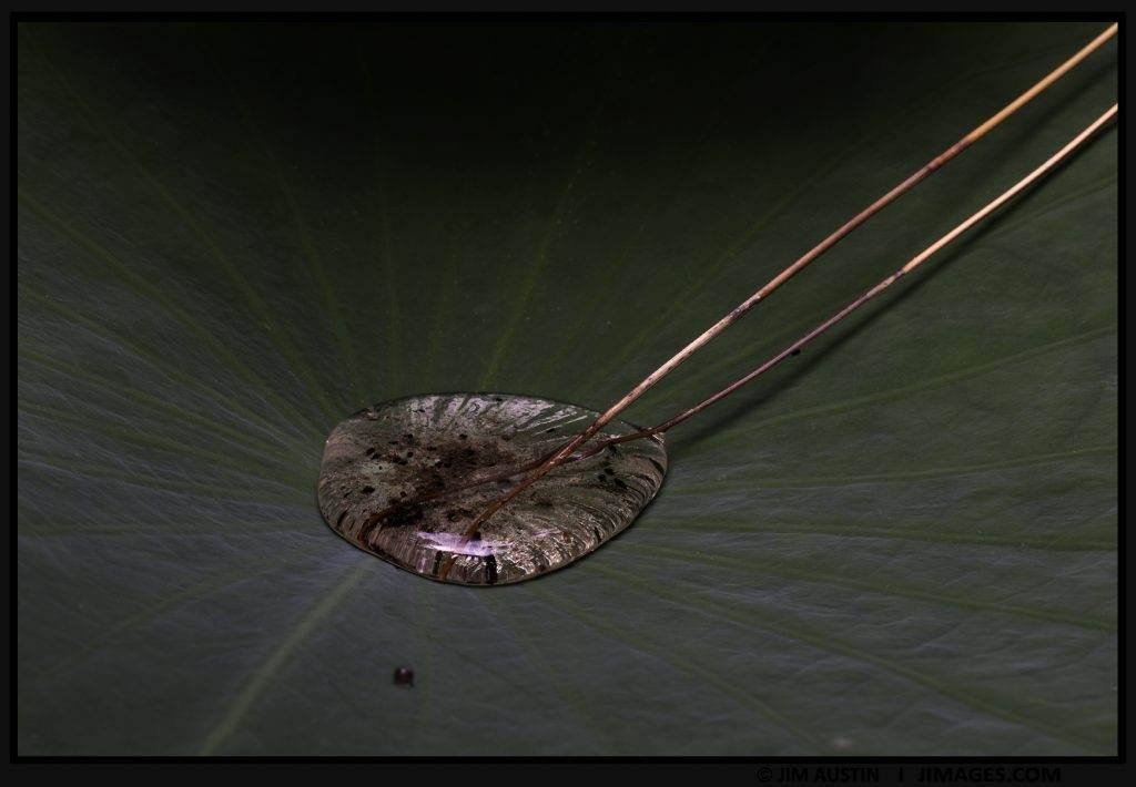 eye-of-lilypad-jim-austin-jimages-art-of-macro-moment