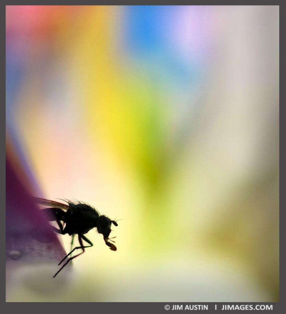 fly-inside-tulip-art-of-macro-jim-austin-jimagesdotcom