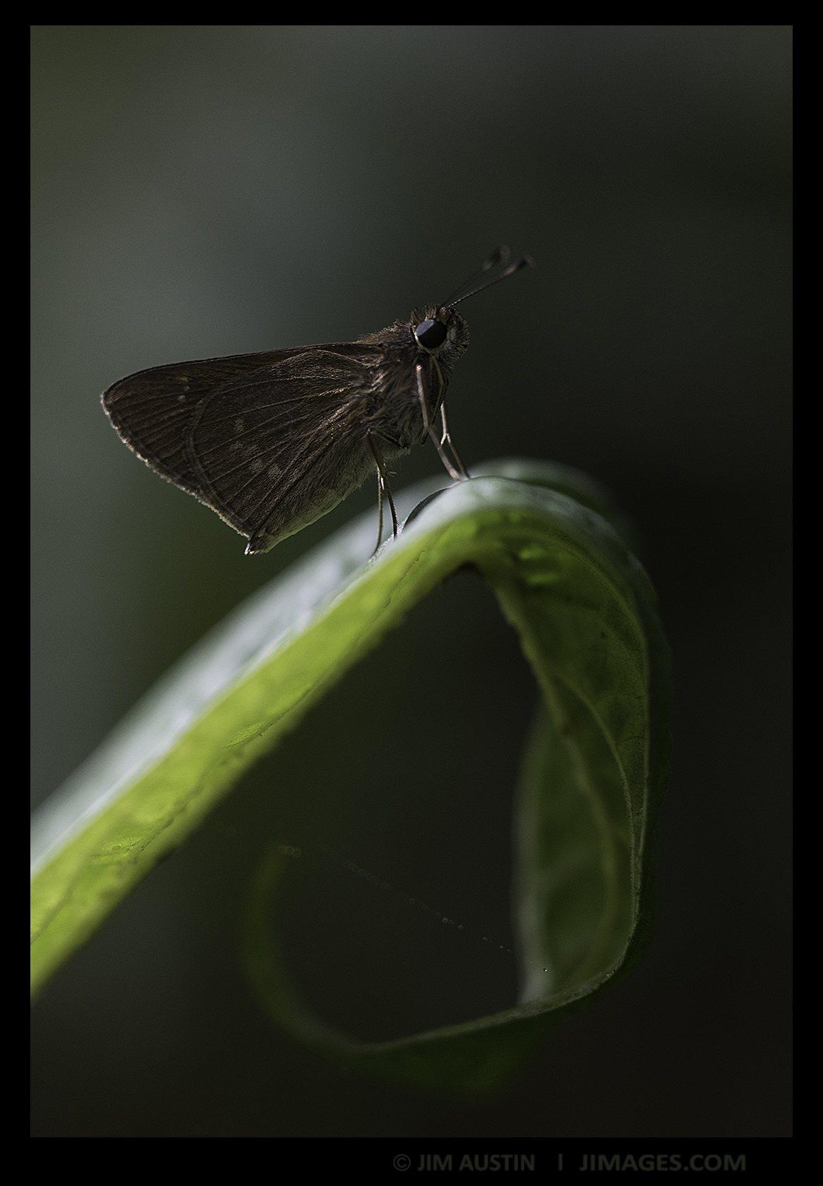 moth-jim-austin-jimages-art-of-macro-moment