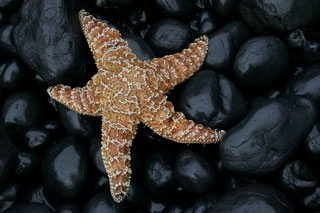 Photo of Star Fish