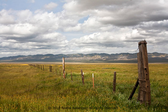 Photo of a fence going across the Carrizo Plains by Noella Ballenger.