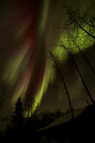 Photo of the Aurora Borealis with trees silhousetted in the foregrond in Alaska by Andy Long