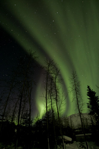 Photo of the Aurora Borealis in green vertical swirls with pine trees in the foreground in Alaska by Andy Long.