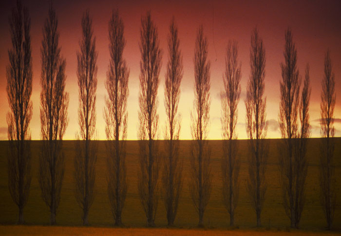Photo of trees at sunset in NSW, Australia by Ron Veto