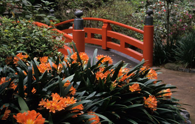 Photo of Descanso oriental garden by Noella Ballenger