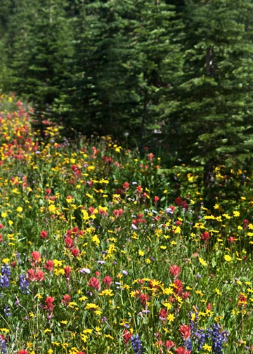 Photo of wildflowers on mountainside by Noella Ballenger