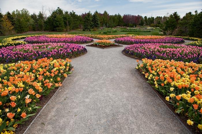 Photo of flower garden by Brad Sharp