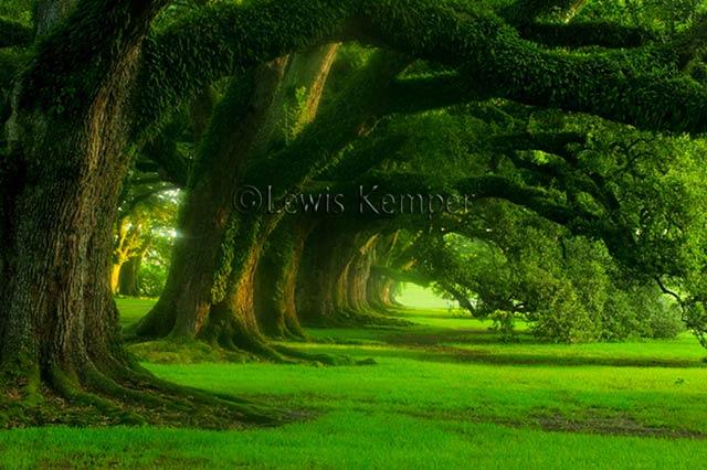 <b>Beautiful Green</b> Nature