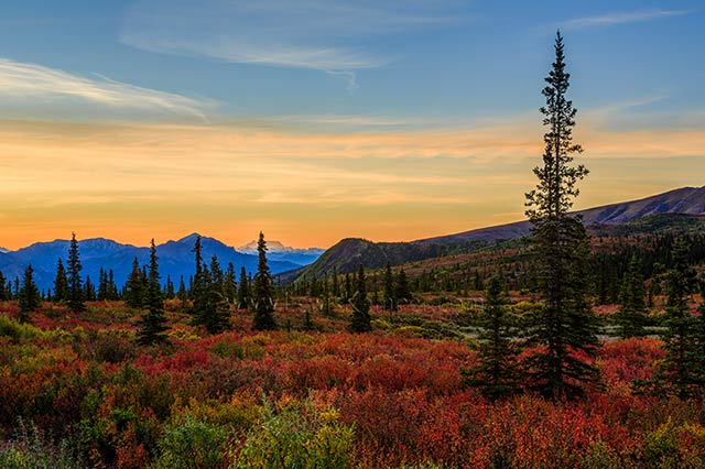 Landscape image of fall colors, pine trees, and mountains in a national park in Alaska by Lewis Kemper.