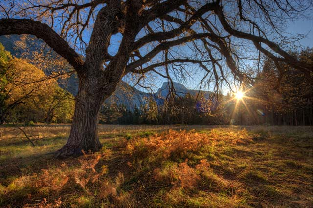 Autumn landscape image of a tree, hills and grass at sunrise by Lewis Kemper.