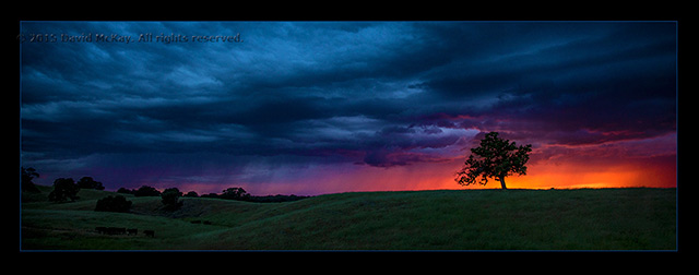 Image of a lone tree and storm clouds at sunset by David McKay.