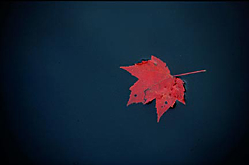 Single red leaf floating on dark blue water by Andy Long.