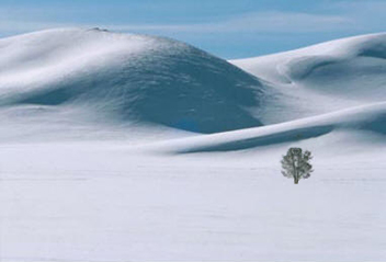 Tonal values of snow with one lone tree by Andy Long.