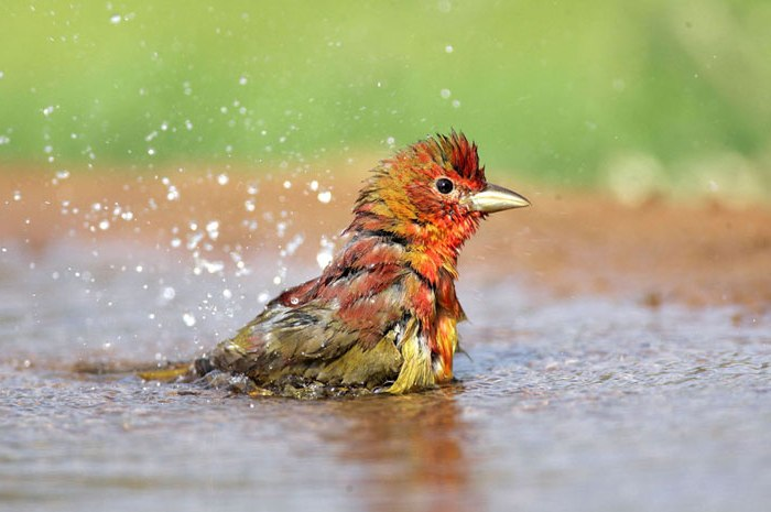 Photo of bird bathing by Andy Long