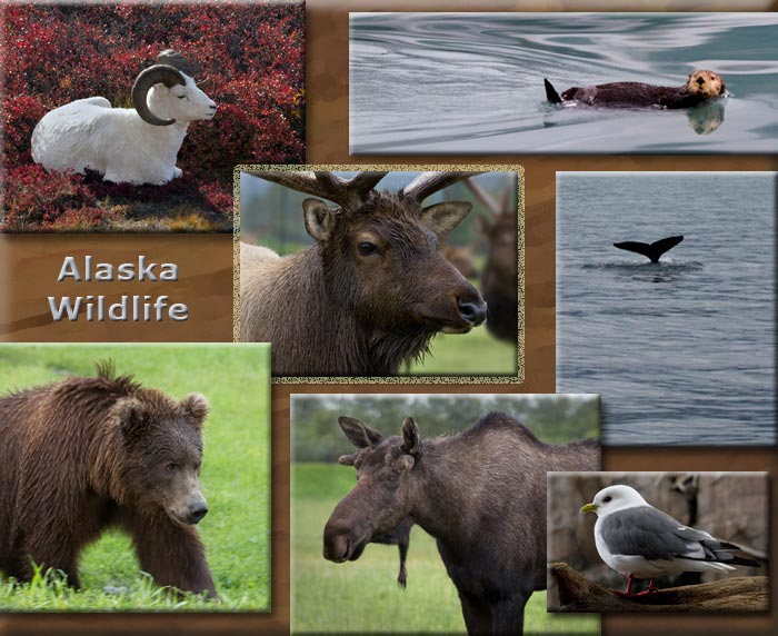 Collage of Alaska wildlife: elk, moose, grizzly bear, whale, dall sheep, sea otter and Kittiwake bird by Barry Epstein