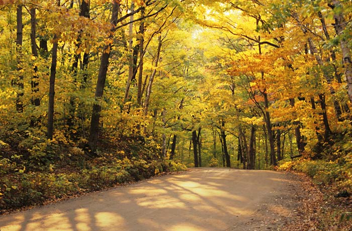 Autumn color photo of trees and road at Hazens Notch in Northern Vermont by Robert Hitchman