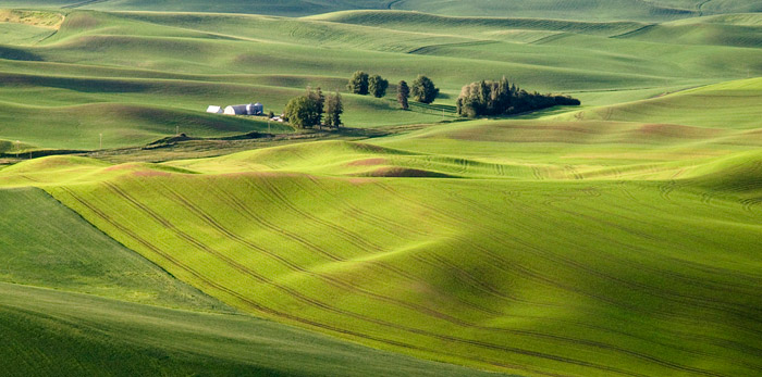 Autumn color photo of fields at The Palouse in Washinton by Robert Hitchman