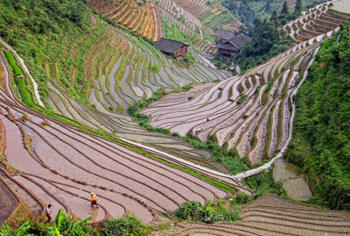 Photo of field terraces on Longsheng Mountain in China by Nan Carder