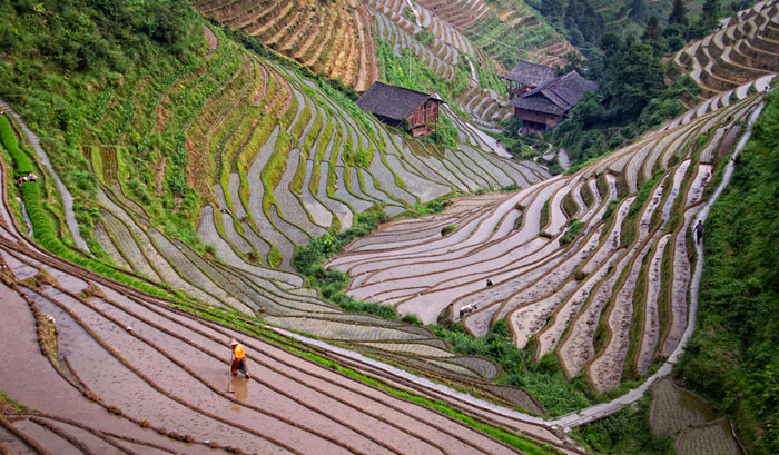 Photo by Nan Carder of field terraces on Longsheng Mountain in China after Photoshop editing by Marla Meier