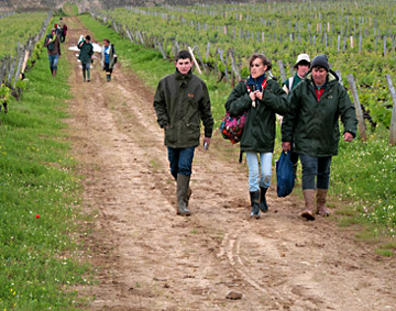 Photo of vineyard field workers in Southern France by Cliff Kolber
