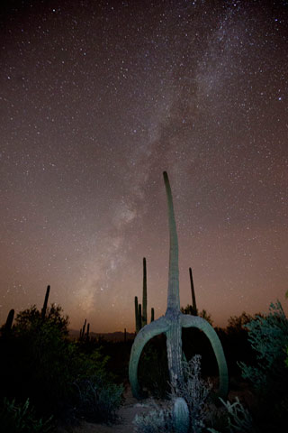 Star photography: Saguaro cactus and Milky Way at Saguaro National Park by Andy Long.