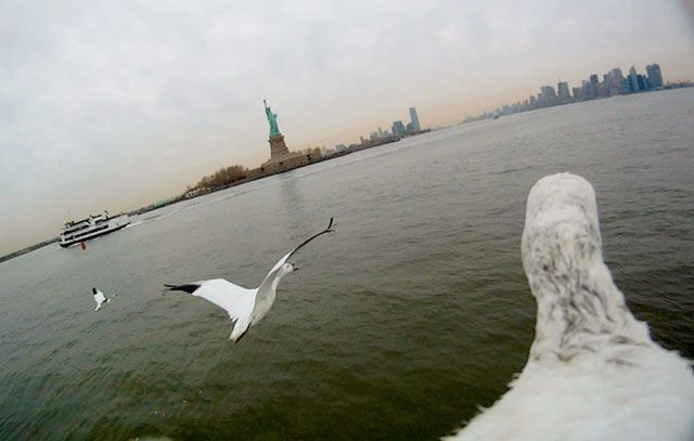 Episode One – North America. Camera onboard shot of snow geese flying over Hudson River, New York, background Statue of Liberty, USA. Credit: © John Downer Productions