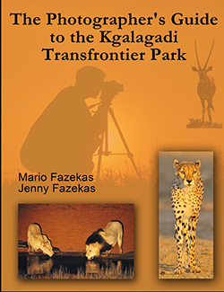 Cover of the book The Photographer's Guide to the Kgalagadi Transfrontier Park.