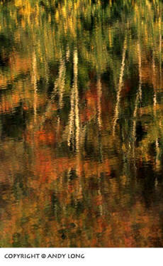 Photo design concepts: trees reflected in water depicting an impressionistic image by Andy Long.